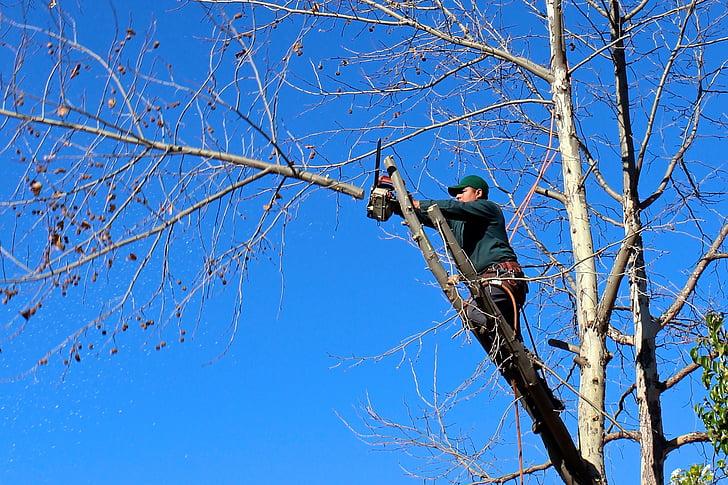 Tree Service Near Me